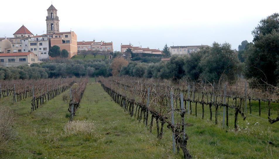 Unes vinyes als peus de Falset, al Priorat.