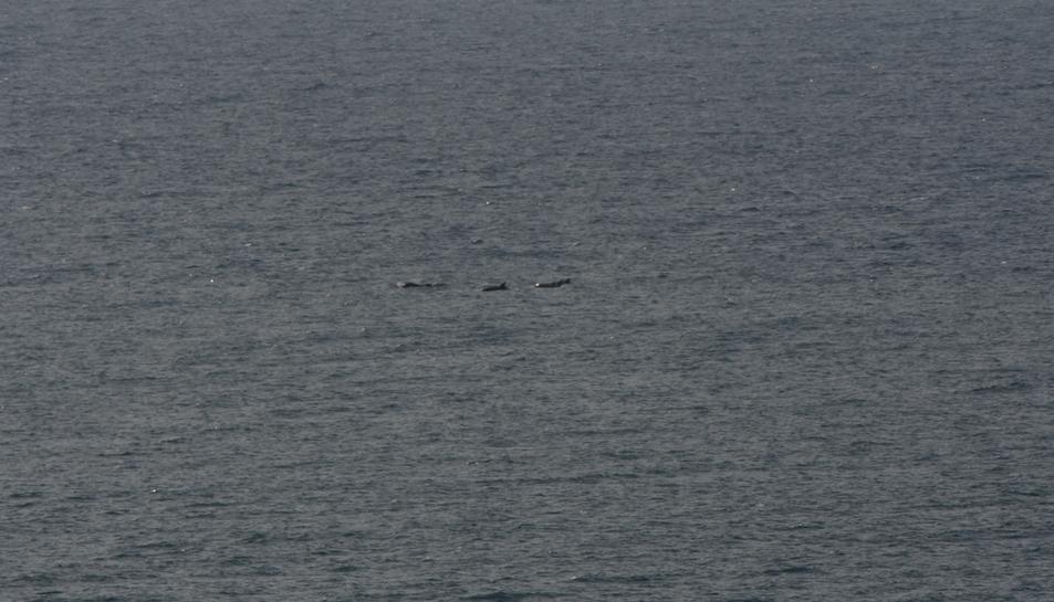 Dofins mulars a 3 quilòmetres de la costa, la setmana passada.