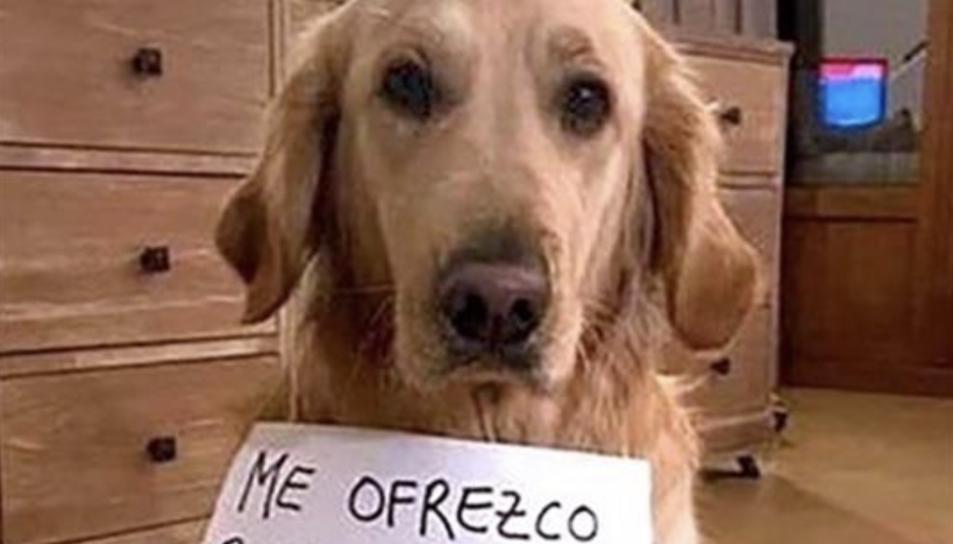 Imatge d'un dels anuncis amb un gos i un cartell penjat del coll.