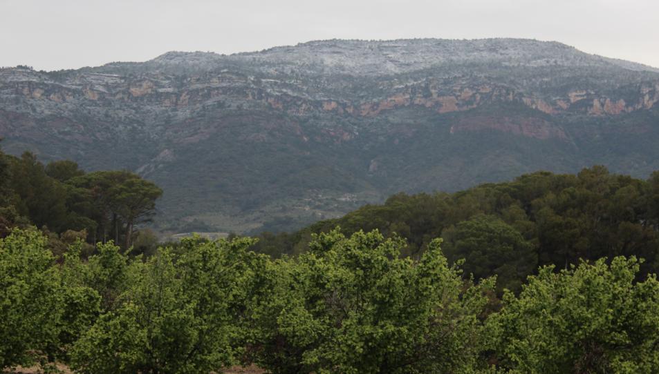 Un camp d'avellaners d'Alforja i al darrere el Montsant, nevat.