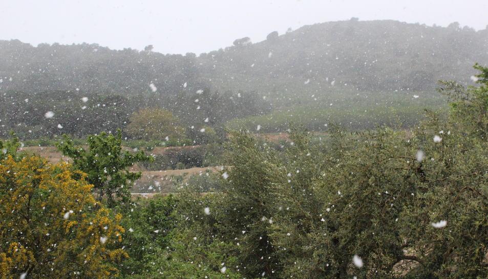 Volves de neu a Alforja.