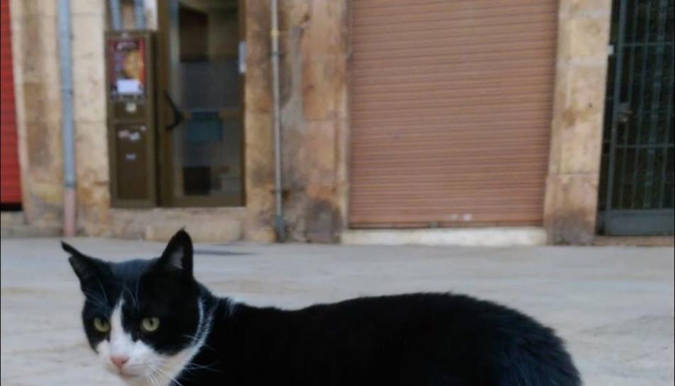 Imatge recent del gat.