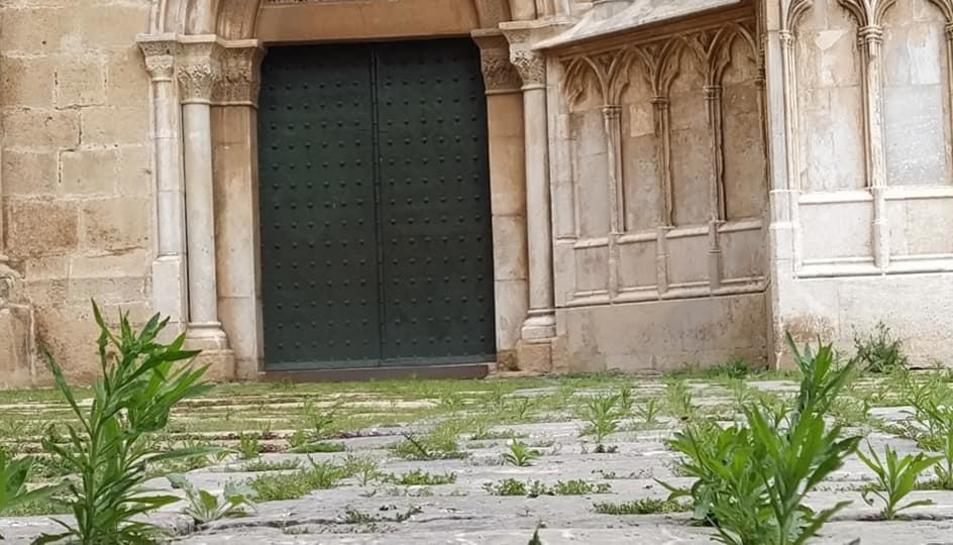 Imatge de les herbes que creixen al Pla de la Seu.