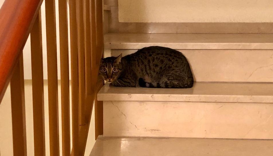 Imatge de la gata trobada a l'escala.