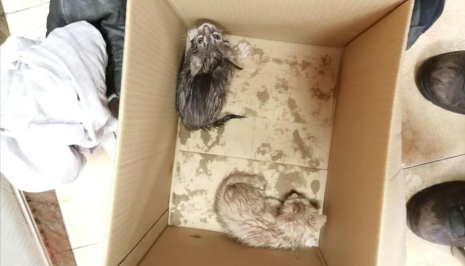 Els gatets rescatats