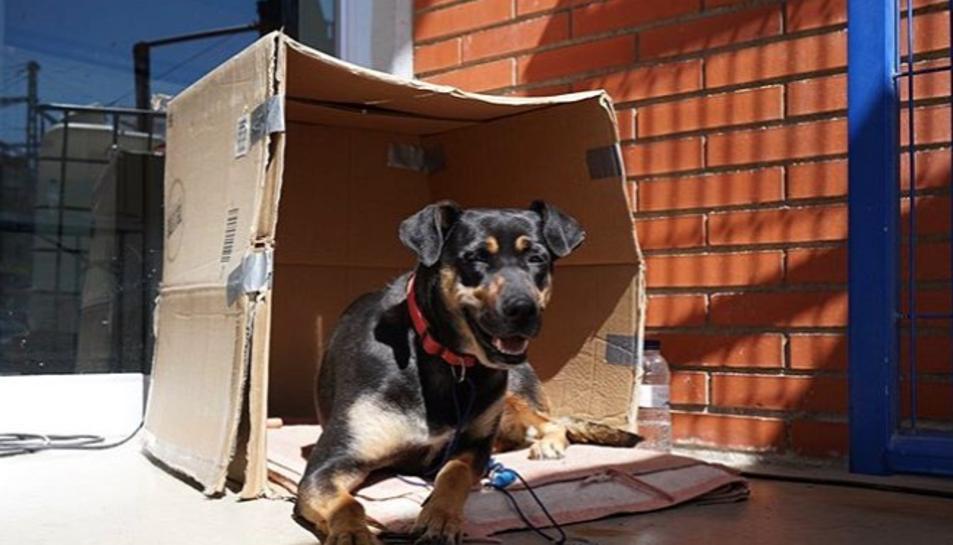 Imatge de la Chika al pavelló del Serrallo.