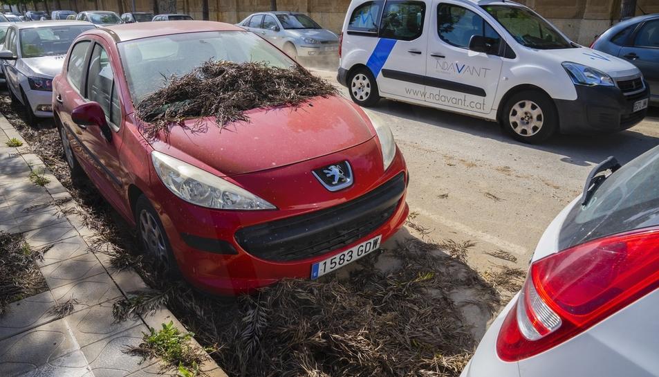 Brutícia al carrer Manuel de Falla