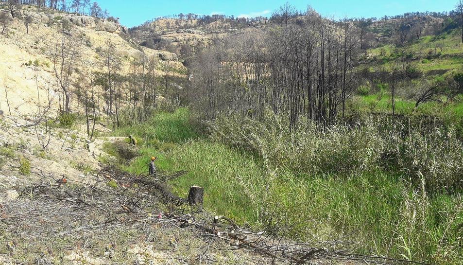 Al barranc Toll de l'Estret s'han retirat els arbres que van resultar afectats per un incendi.