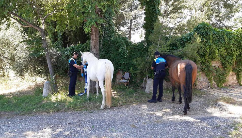 Dos agents amb els cavalls.