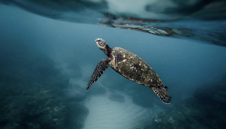 Imatge d'arxiu d'una tortuga.