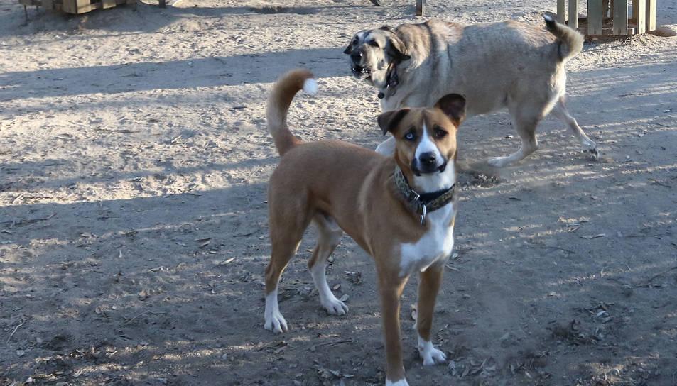 Una imatge d'arxiu d'un espai per a gossos.
