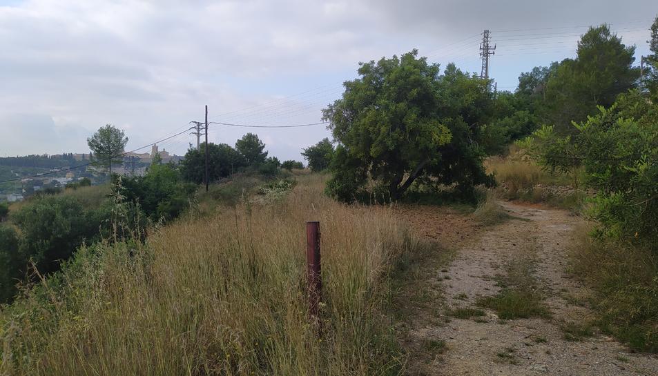 Els terrenys de la finca on s'ubicarà l'aparcament d'autocaravanes, a la Muntanya de l'Oliva.