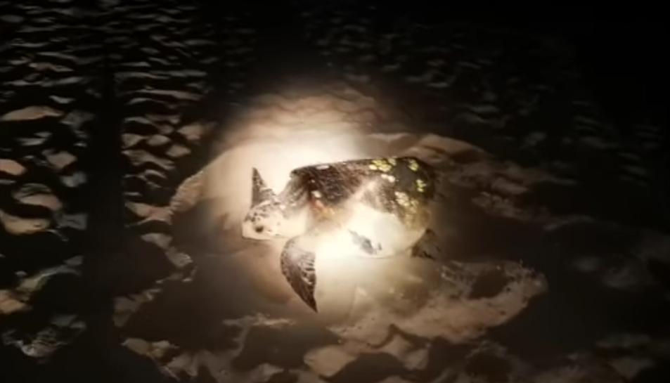 Captura del vídeo de la tortuga a la platja de la Pineda.
