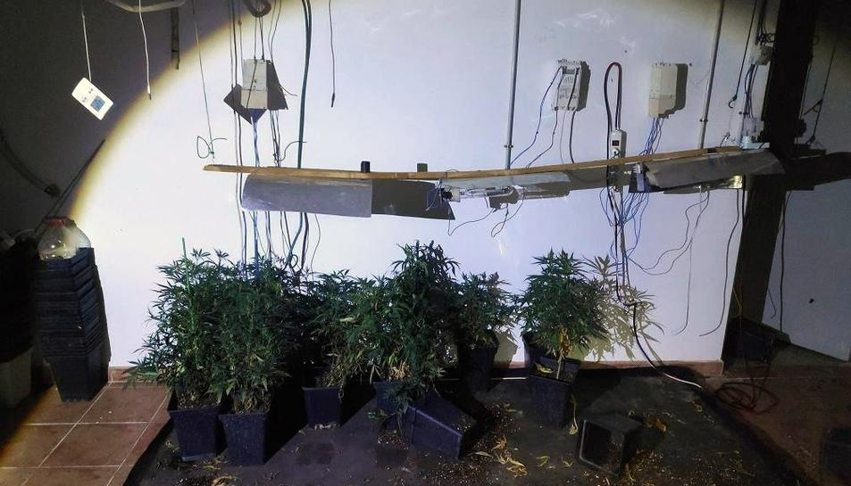 Els Mossos van denunciar també a l'inquilí de la casa per cultivar marihuana.