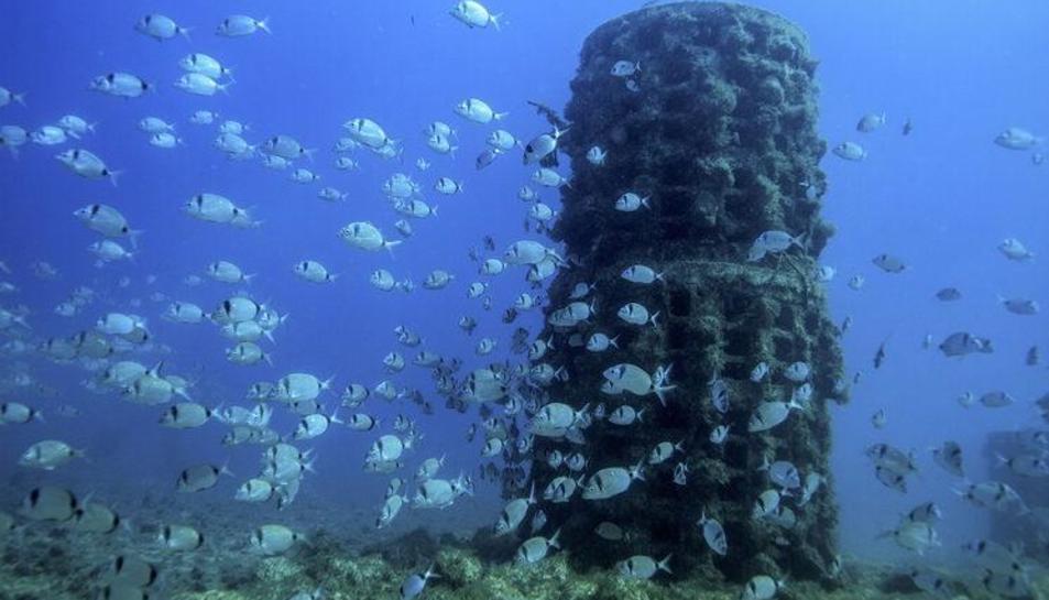 Els biòtops atrauen la flora i la fauna marines tot formant un escull