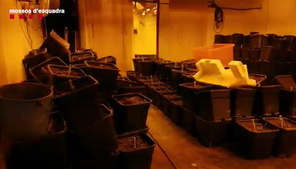 Els investigadors van localitzar en una habitació amagada al pàrquing 50kg de cabdells de marihuana premsats al buit.