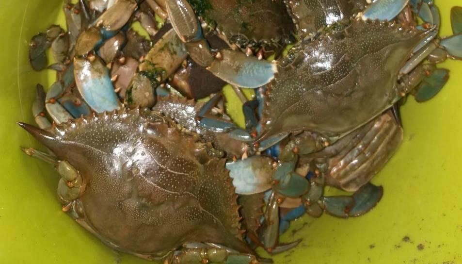 Imatge dels crancs blaus pescats.