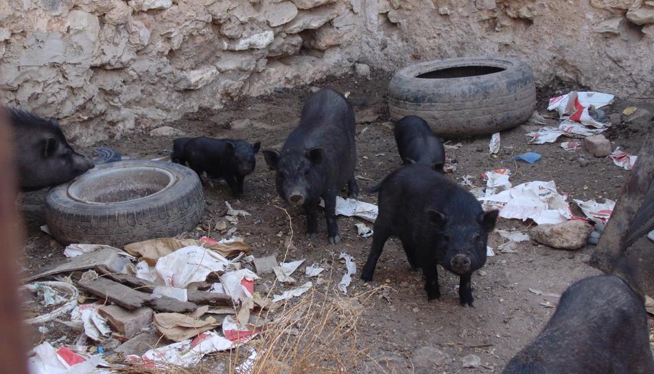 Imatge de la granja il·legal que ha estat denunciada.