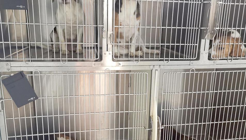 Alguns dels gossos rescatats a les gàbies del laboratori.