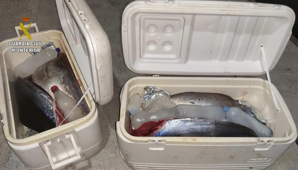 Imatge de les neveres amb les tonyines vermelles confiscades.