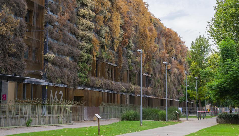 Imatge de l'estat de sequera que presenten les plantes del jardí vertical per la manca de reg.