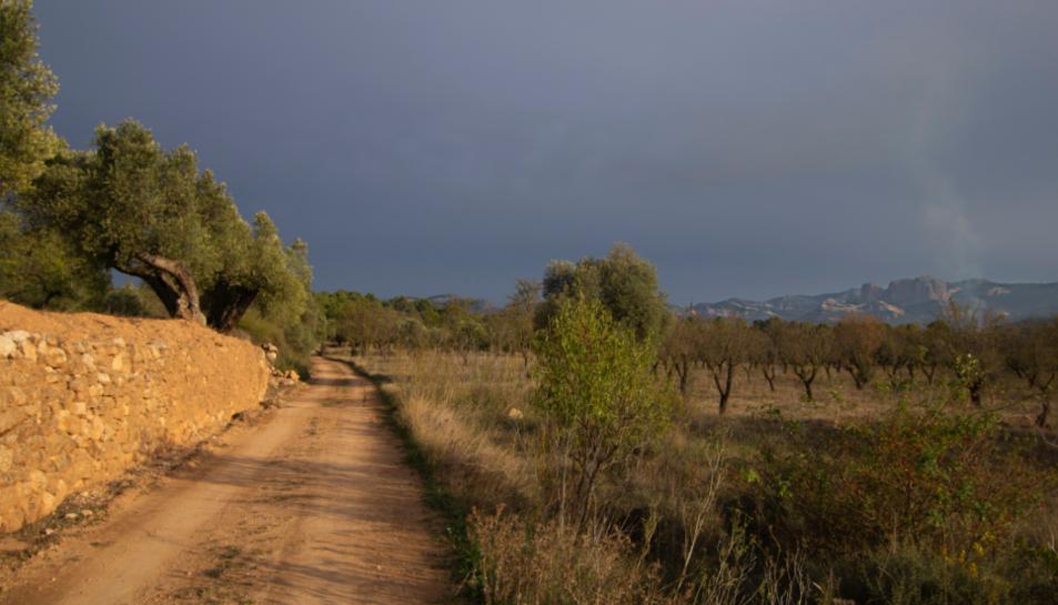 El camino entre olivares, al fondo los puertos de Tortosa-Beceite, donde destacan las Roques de Benet