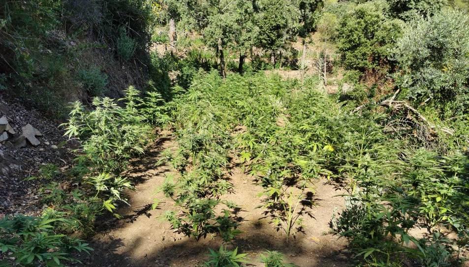 Imatge de diverses plantes localitzades a l'Aleixar.