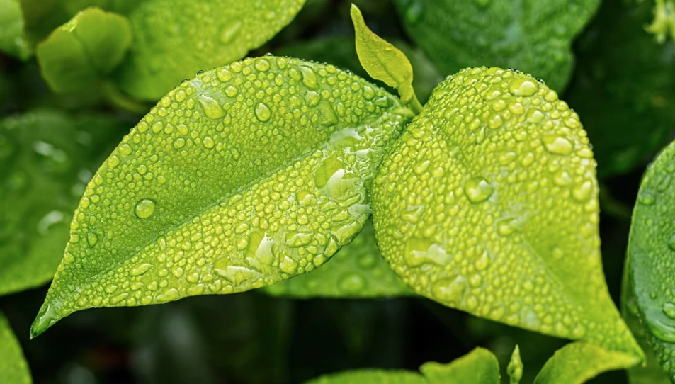 Permet augmentar la capacitat de les plantes per produir i emmagatzemar pigments antioxidants i nutrients essencials.