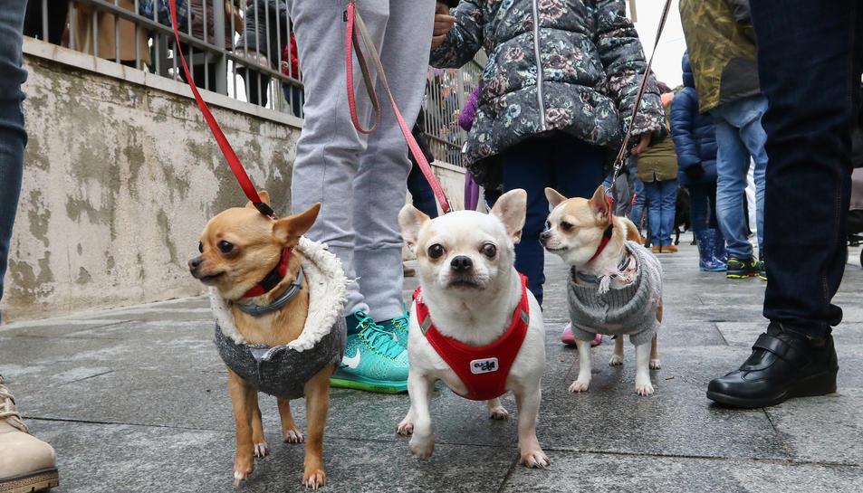 Una imatge d'arxiu de gossos passejant.