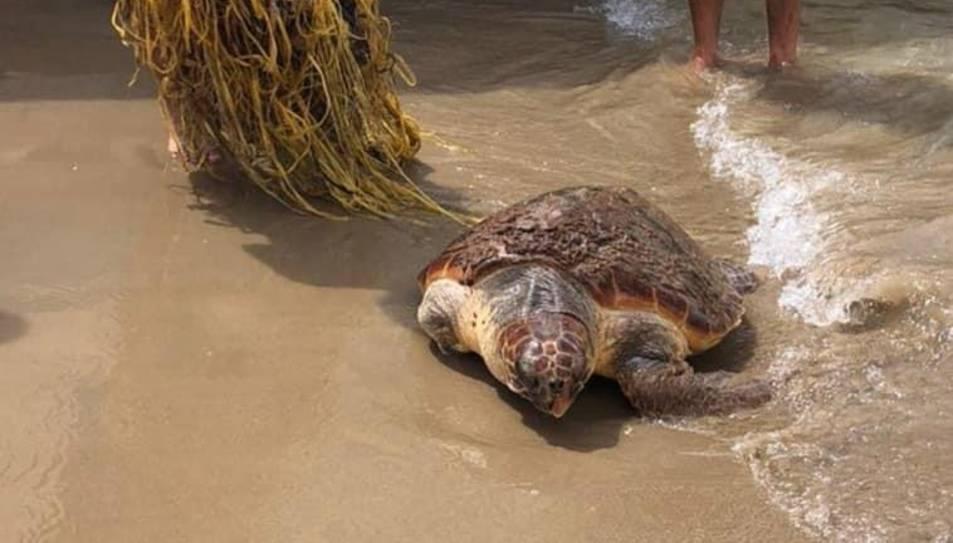 Imatge de la tortuga.