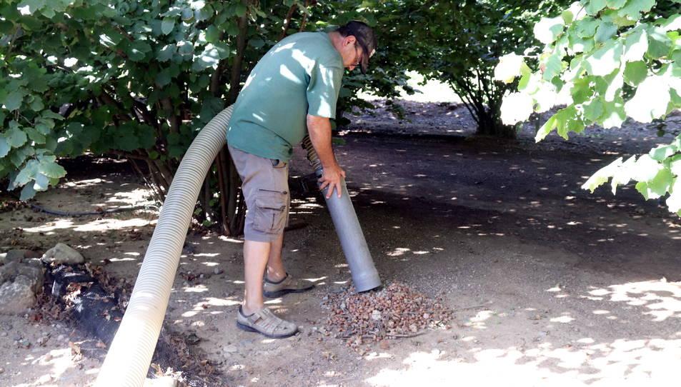 Rafel Español, responsable nacional del sector de la fruita seca d'Unió de Pagesos, amuntegant avellanes a la seva finca del Morell.