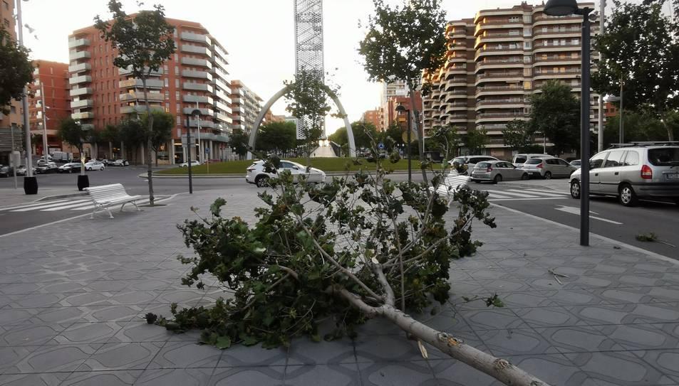 Imatge de l'arbre caigut al carrer Josep Maria Tarrassa de Tarragona.