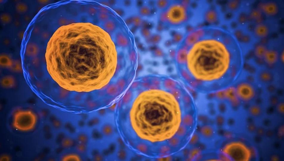 Els nanomotors són capaços de moure's en un fluid, utilitzant diverses biomolècules com a combustible.