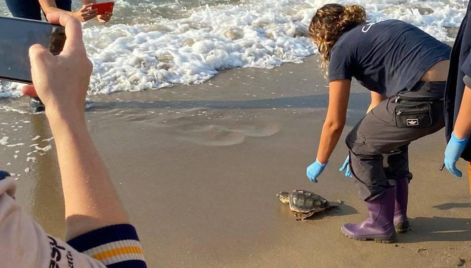 Personal del CRAM en el moment de tornar la tortuga al mar.