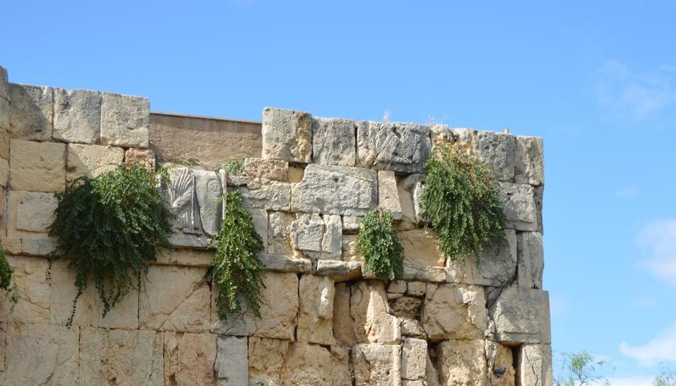 El relleu de Minerva, rodejat d'herbes.