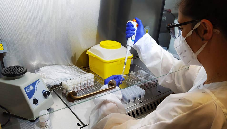Una professional del Laboratori Clínic de la Fundació Salut Empordà processant mostres de PCR