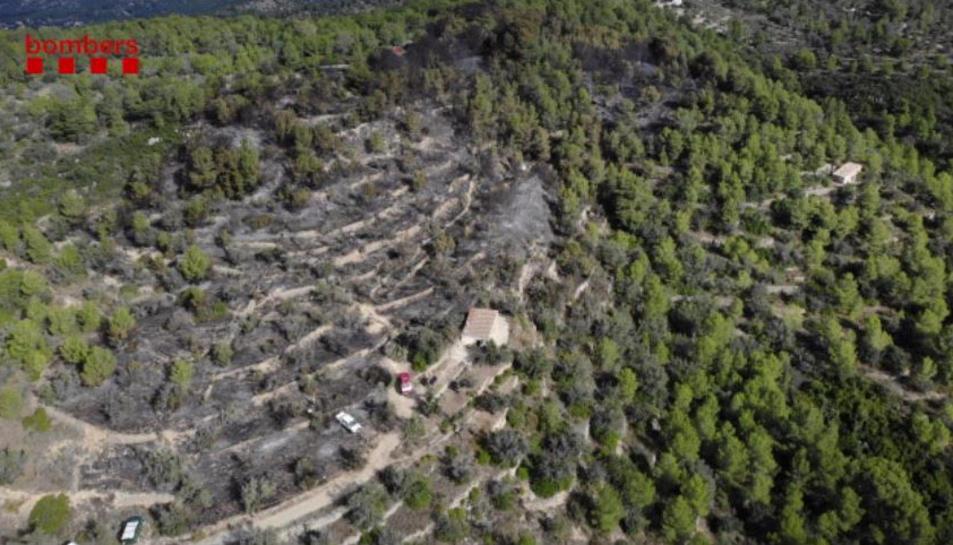 Zona forestal afectada per l'incendi al Coll Redó de Tortosa.