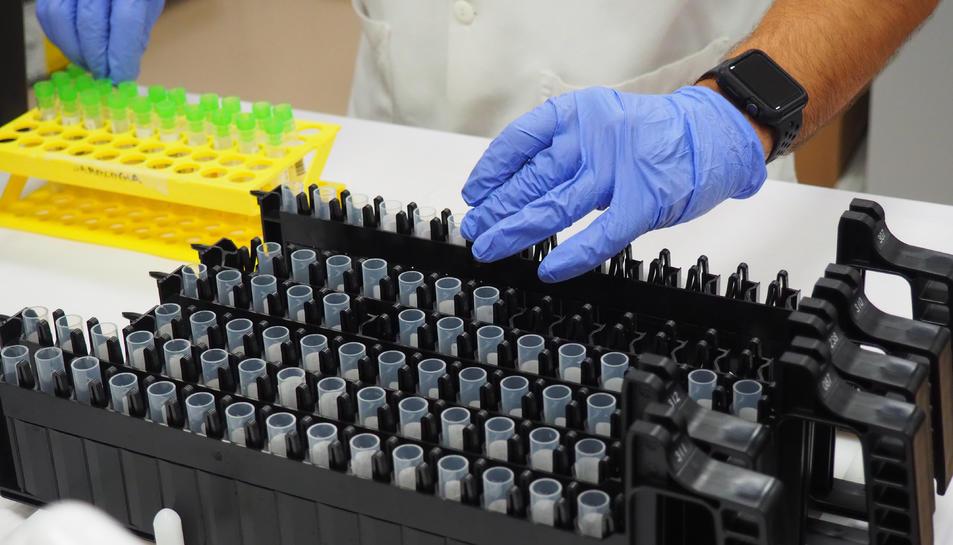 Diverses mostres PCR preparades per a ser processades.