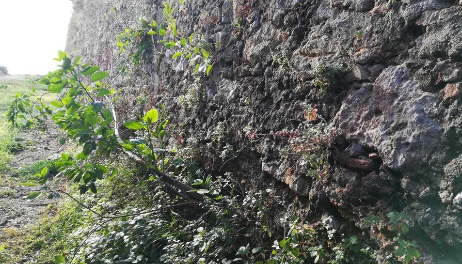 En primer terme, un dels arbres en fase de creixement en un dels murs exteriors del fortí.