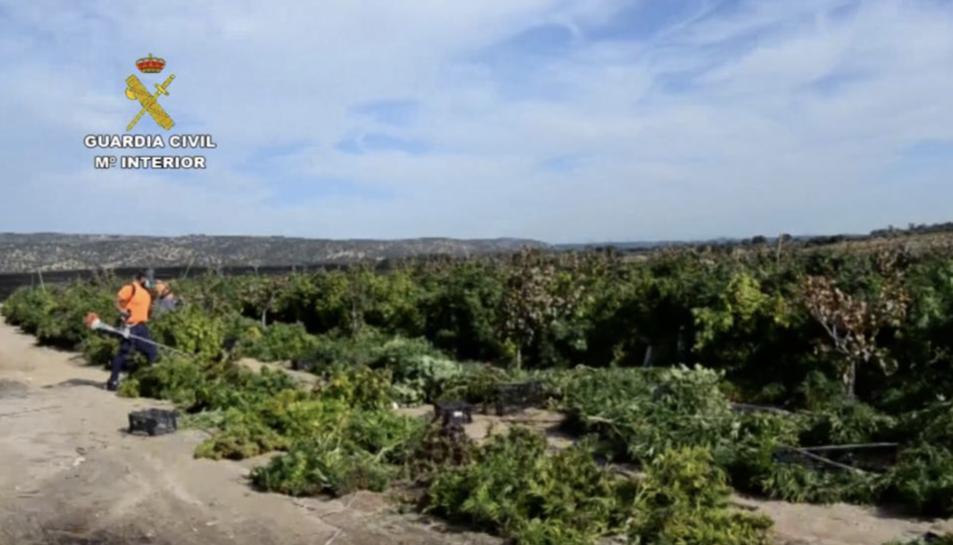 Imatge de la plantació.