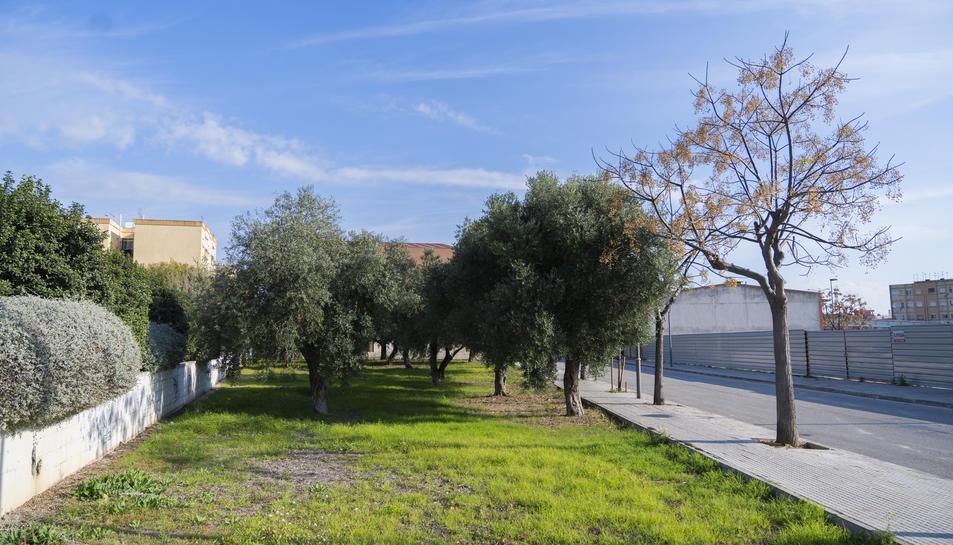 Un jardí municipal al Parc Riu Clar, una de les zones que és competència del lot 1 de jardineria.