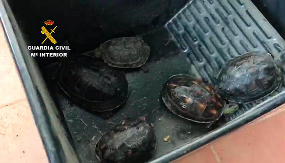 Imatge d'algunes tortugues intervingudes.