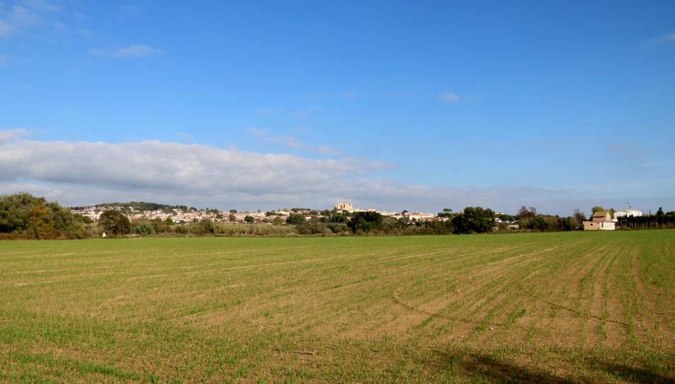 Un sembrat de la Plana del Vinyet, a Tarragona, amb la vila d'Altafulla al fons. Imatge del 18 de novembre del 2020.