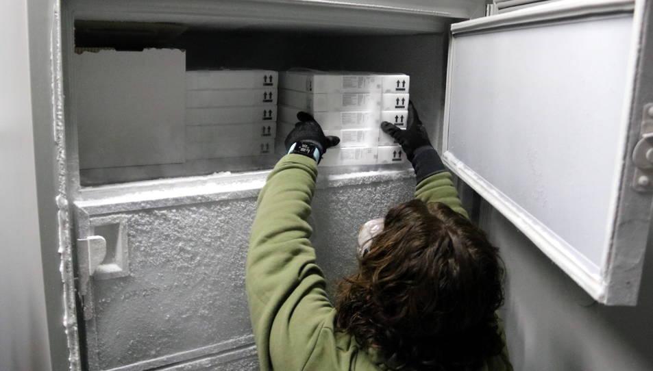 Imatge d'una treballadora posant una capsa de vacunes al congelador.