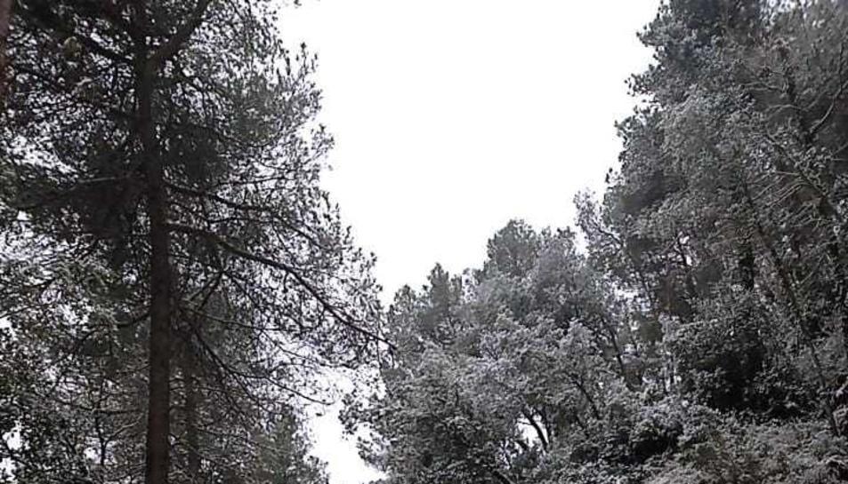 La neu fa acte de presència a Colldejou