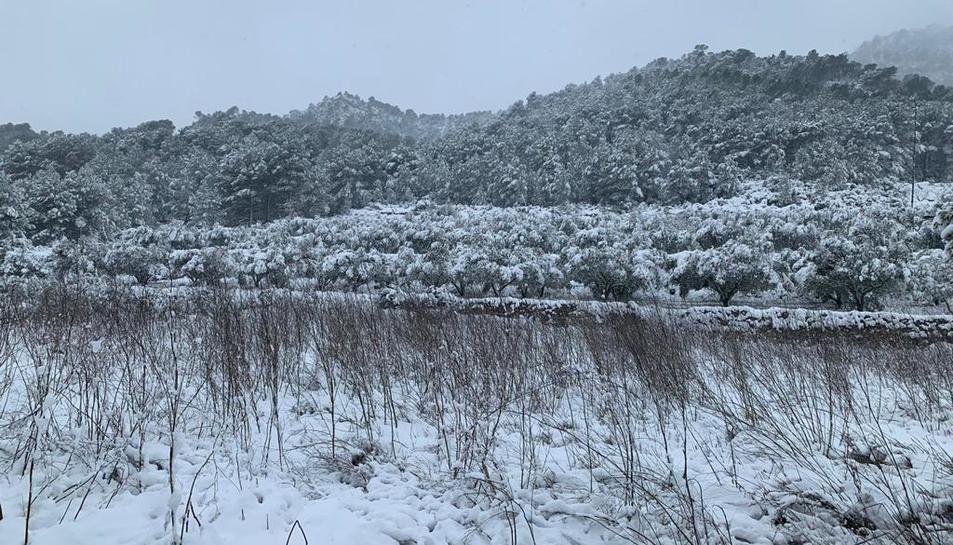 La neu a Móra d'Ebre