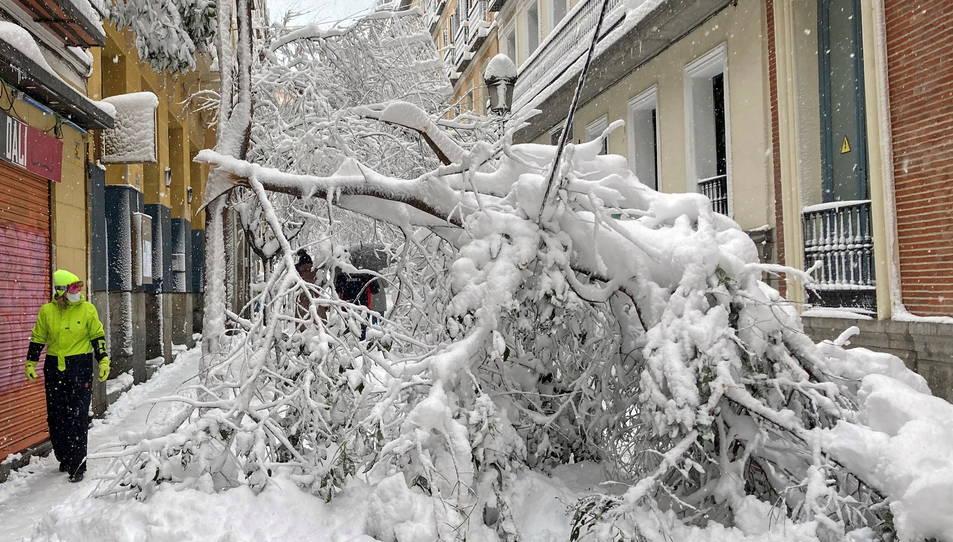 Un arbre caigut a causa del temporal Filomena, que ha descarregat amb força a la comunitat de Madrid.