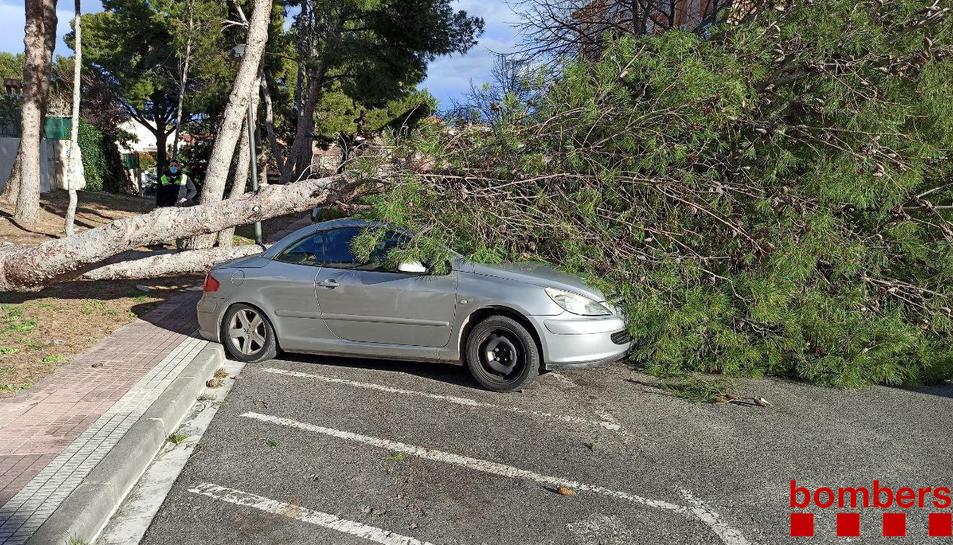 Un arbre ha caigut sobre un cotxe a Cambrils.
