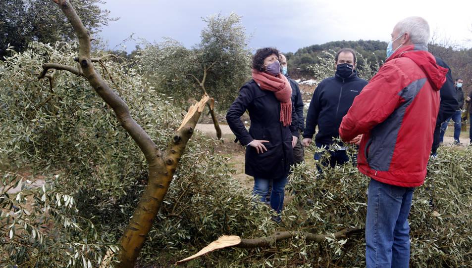 La consellera d'Agricultura, Teresa Jordà, durant una visita a un camp d'oliveres afectat per la nevada del temporal Filomena, a Vinaixa