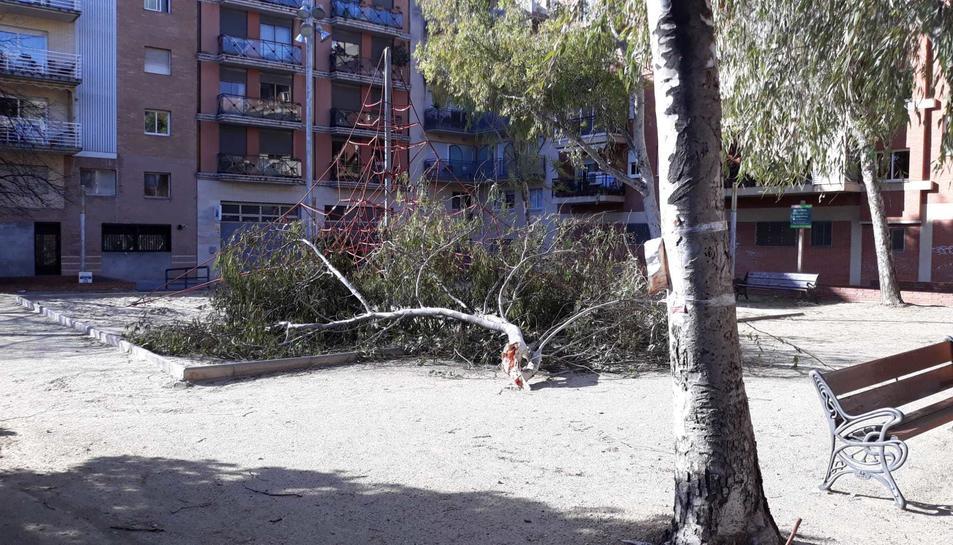 Un arbre caigut al parc del carrer Pompeu Fabra de Tarragona.